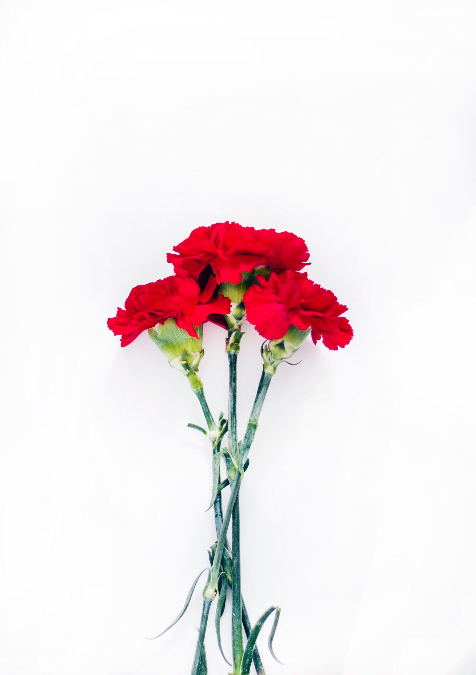 Corona de flores y claveles